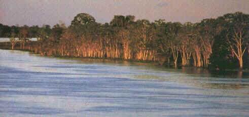 Амазонка дорога в джунглях